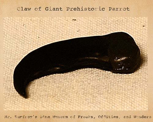 Curiosity House: Giant Parrot Claw